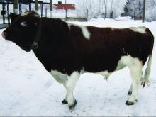 Флокс 81315